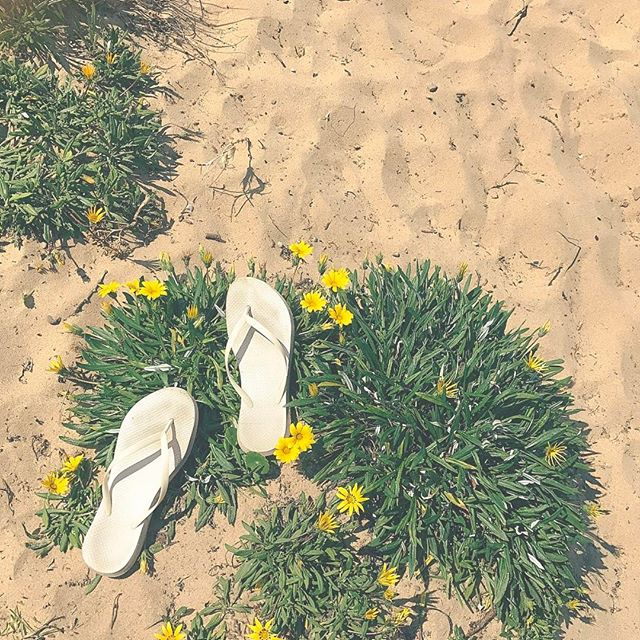 pair of white flip flops on a piece of grass with yellow flowers on the beach