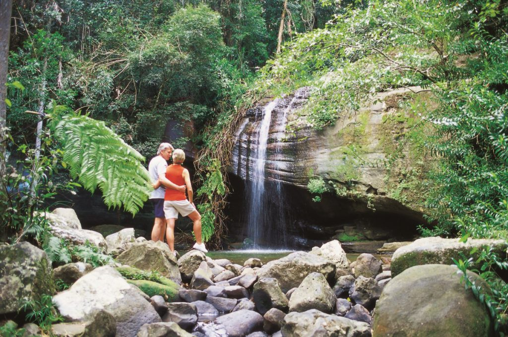 Brisbane to Cairns itinerary Buderim Forest