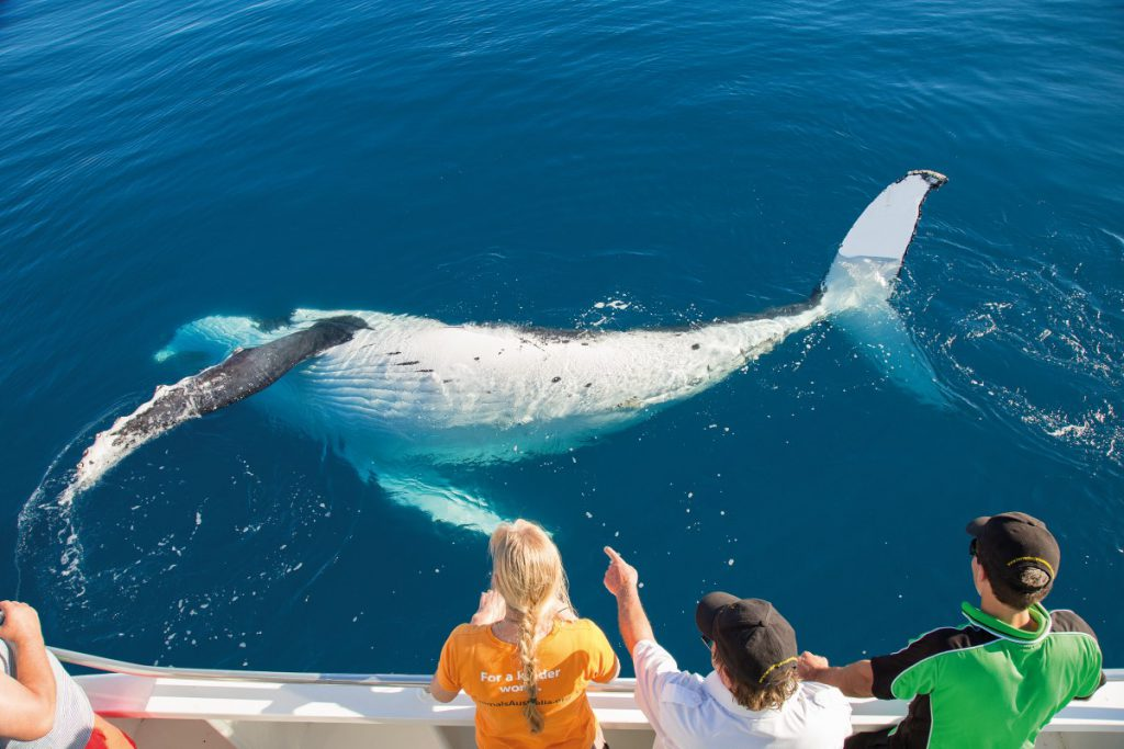 Brisbane to Cairns Itinerary Hervey Bay Whalewatching