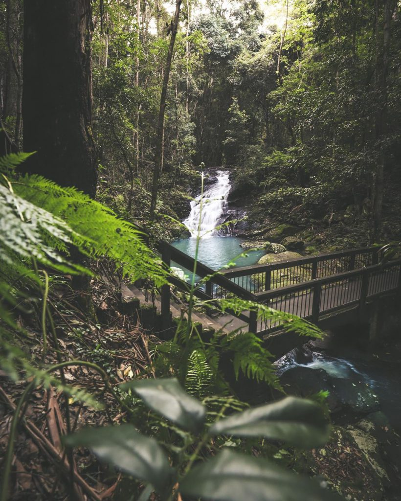 forest stream in Kondalilla National Park