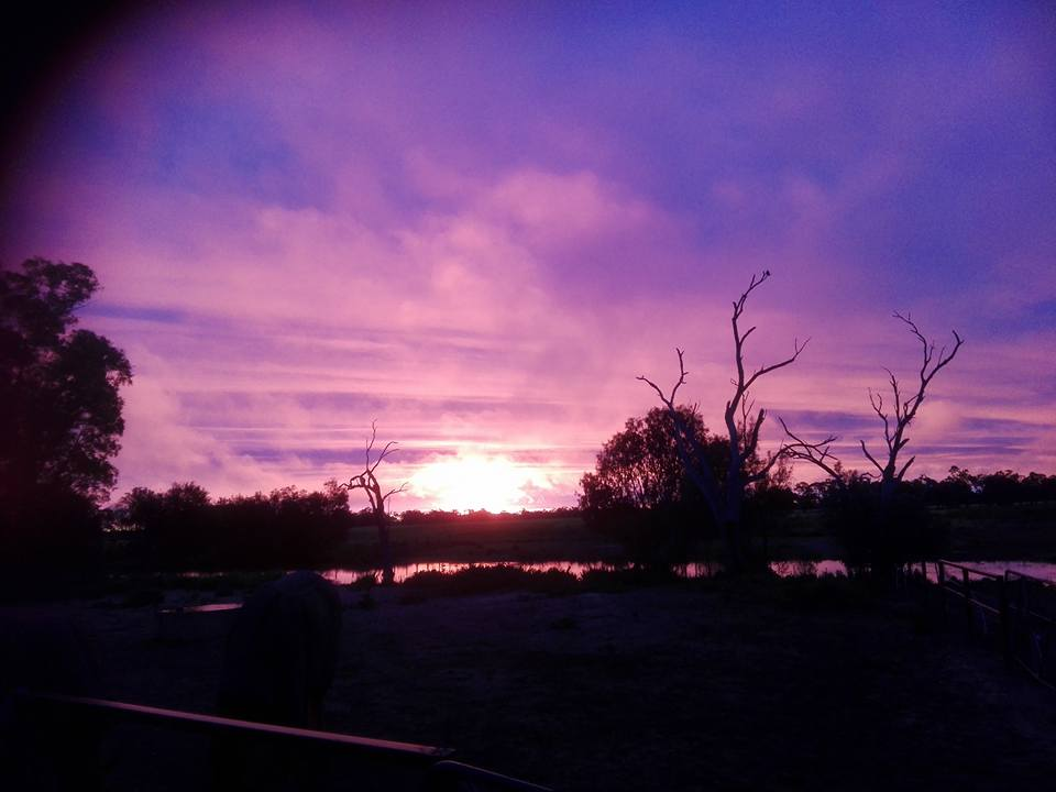 purple sunset over Macquarie River